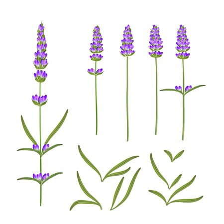 Provence flowers collection. Set of lavender flowers elements. Violet flowers kit. Fashion summer print bundle. Elements for invitation card and your template design. Vector illustration. Stockfoto - 128329380