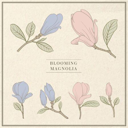 Set of floral elements. Bundle of Linear sketch of Magnolia Flowers.