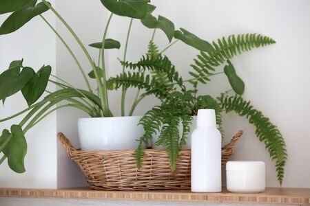 Natural cosmetics and leaves of tropical and fern on a light background Stock Photo