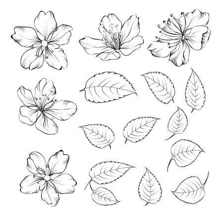 Set of sakura flowers elements. Collection of blooming prunus flowers on a white background. Vector illustration bundle.