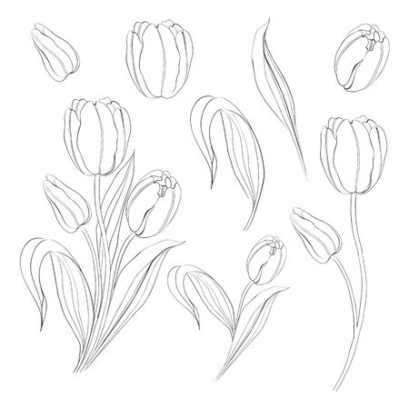Hand drawn tulips collection in line style contour templates. Ink sketch elements of spring flowers for black and white design. Vector illustration. Vector Illustration