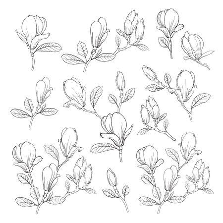 Reihe von floralen Elementen. Bündel der linearen Skizze der Magnolien-Blumen. Sammlung Hand gezeichnete Artschwarzweiss-Linie Illustrationen auf einem weißen Hintergrund. Vektor-illustration