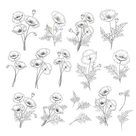 Ensemble de style linéaire de pavot blanc, illustration de contour dessiné à la main de fleurs isolées sur fond blanc. Collection de coquelicots blancs. Illustration vectorielle.