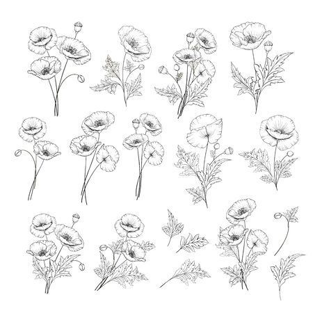 Linear style set of white poppy, hand drawn contour illustration of flowers isolated on a white background. White poppies collection. Vector illustration.