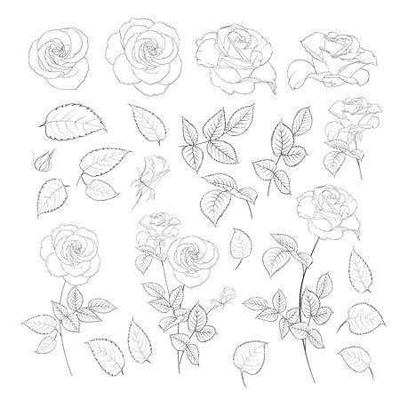 Rose bud collection. Elements of roses isolated on white background. Bouquet of roses. Flower isolated against white. Beautiful set of flowers. Vector illustration.