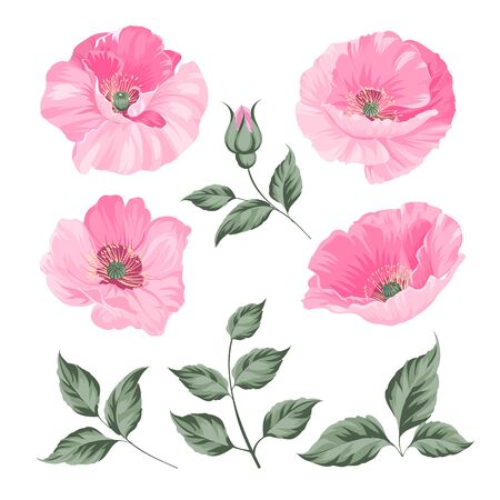 Vintage poppy set. Wedding flowers bundle. Flower collection of watercolor detailed hand drawn poppies. Red poppies collection. Vector illustration.