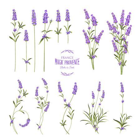 Set von Lavendelblütenelementen. Sammlung von Lavendelblüten auf weißem Hintergrund. Vektorillustrationsbündel.