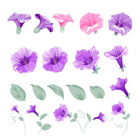 Set of bindweed flower elements. Collection of convolvulus flowers on a white background. Floral templates with garden blooming flowers. Vector botanical illustration.