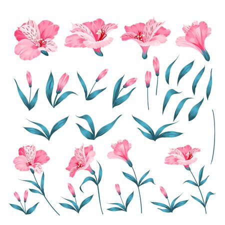 Alstromeria pink branch isolated on white. Beautiful alstroemeria collection for your personal design. Flower branches set. Vector illustration.