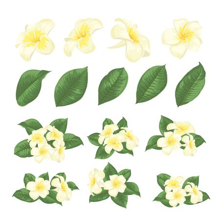 Ensemble d'éléments de fleurs tropicales. Collection de fleurs de plumeria sur fond blanc. Modèles floraux avec des fleurs en fleurs de jardin. Paquet d'illustration vectorielle.