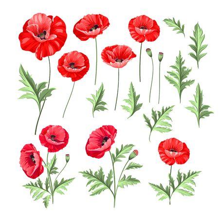 Conjunto de estilo dibujado a mano de amapola blanca, ilustración botánica de flores aisladas sobre fondo blanco. Colección de amapolas blancas. Ilustración de vector.