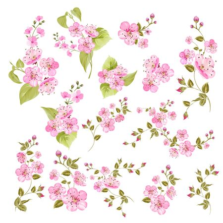 Collection of cherry flowers, set. Cherry blossom bundle. Black flowers of prunus isolated over white. Flowers contours collection. Vector illustration.