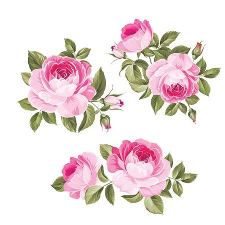 Fiori d'epoca impostati su sfondo bianco. Fascio di fiori di rosa da sposa. Collezione di fiori di rose disegnate a mano dettagliate dell'acquerello. Bocciolo e rosa decorativi vintage. Illustrazione vettoriale.