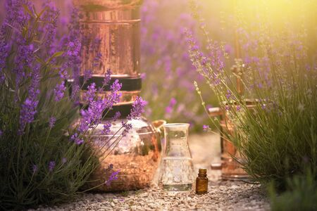 Distilling apparatus alembic with esential oil between of lavender field lines. Lavender flower field, illustration of essetial oil distillation. Stock Photo