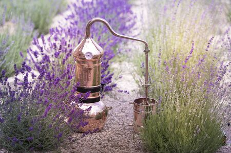 Distilling apparatus alembic on the ground with esential oil between of lavender field lines.