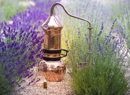 Distilling apparatus alembic with esential oil between of lavender field lines. Illustration of essetial oil distillation. Stock Photo