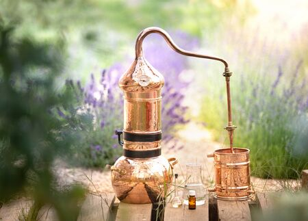 Distilling apparatus alembic with esential oil between of lavender field lines. Stock Photo