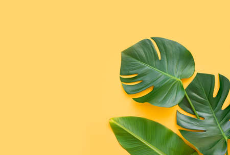 Tropical palm tree leaf and hat on a yellow background. Vibrant minimal fashion concept Banque d'images