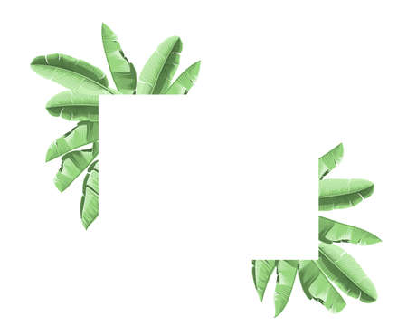 Summer tropical frame with banana leaves. Background with eucalyptus branches.Vector illustration Illustration