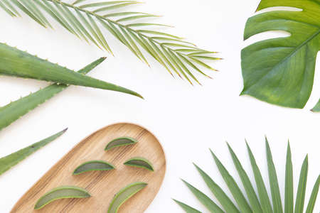 Vibrant flat lay composition with aloe vera and tropical palm.