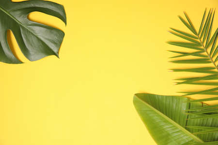 Summer background with palm leaves on yellow.