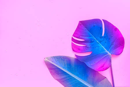 Neon tropical palm tree leaf on a pink background. The place is empty on the photo for your text. Vibrant minimal fashion concept.