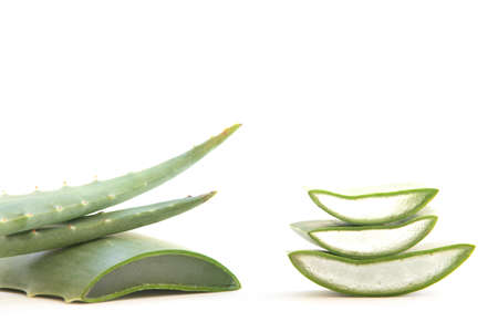 Fresh leaves and slices of aloe vera on a tropical background.