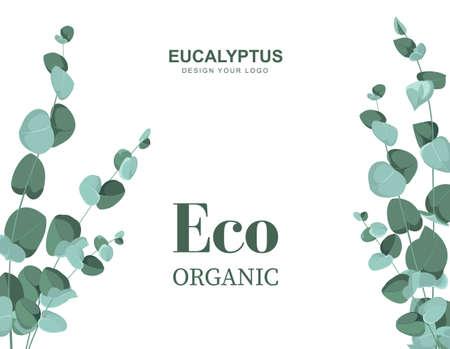 Eucalyptus branches on a white background.