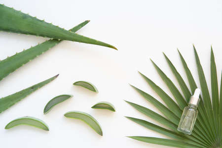 Vibrant flat lay composition with aloe vera and bottle massage oil. Banque d'images