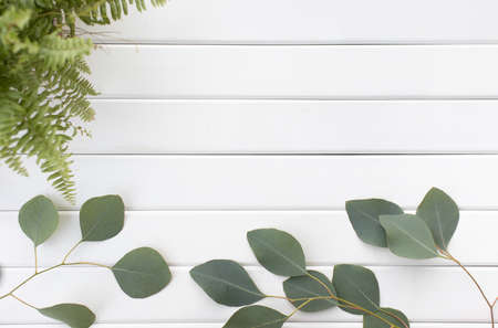 Green leaves of eucalyptus branches on a wooden background.