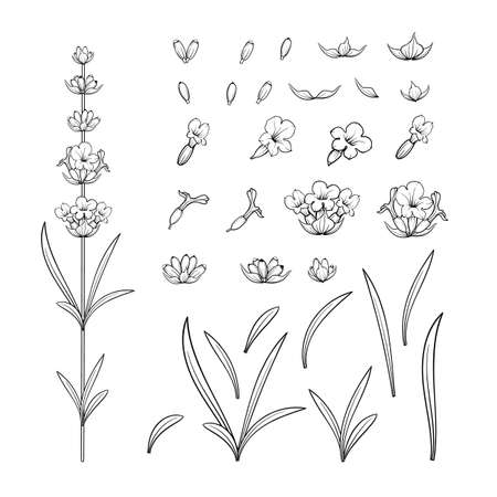 Set of lavender flowers outline elements. Ilustrace