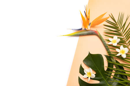 Tropical background with palm monstera leaves and flower . 免版税图像