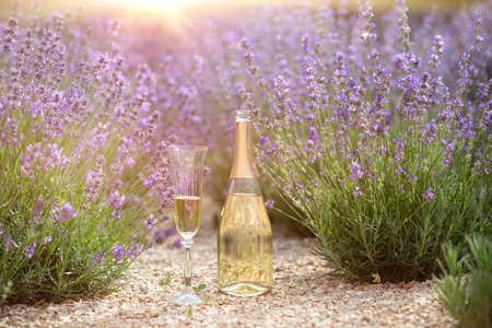 Champagne is poured into glasses in a sunset lavender field.