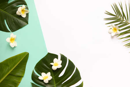 Tropical background with palm leaves monstera and flower.