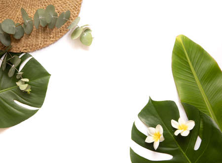 Tropical background with palm monstera leaves.