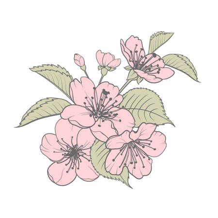 Hand drawn design elements sakura flowers collection. 矢量图像