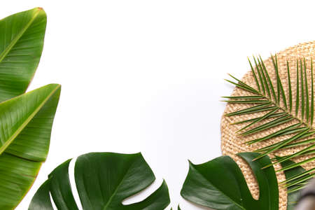 Tropical background with palm monstera leaves .