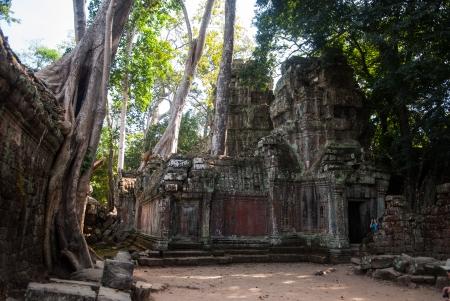 Ta Prohm ruines du temple d'Angkor, au Cambodge Banque d'images - 25396682
