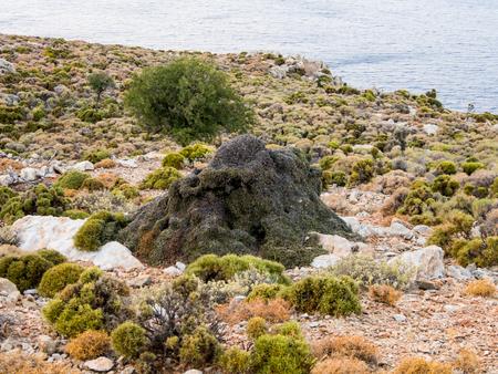 brink: Huge ant-hill at Tilos island brink, Greece