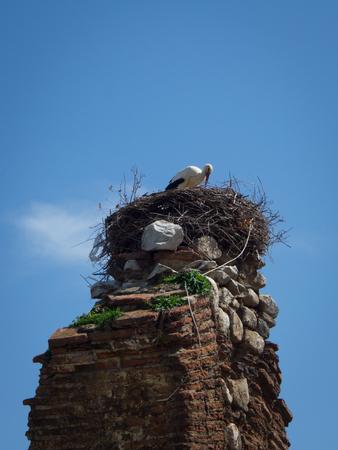 Stork nest on an ancient column in Selcuk,Izmir, Turkey