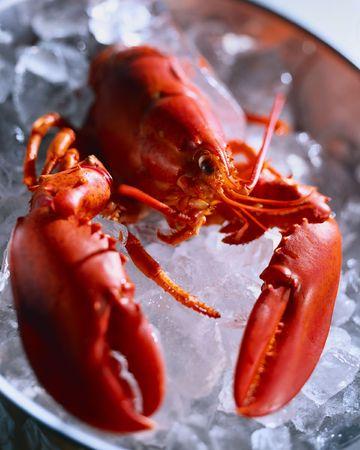 Red lobster in ice, shellfish Фото со стока
