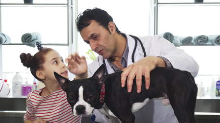 Handsome cheerful mature male vet working with his little client examining dog while little girl is petting the puppy service medicine family love profession occupation healthcare domestic canine.