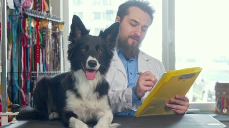 Adorable happy healthy dog resting on examination table, vet working on the back. Veterinarian doctor writing on his clipboard after examining cute fluffy canine. Medicine, jobs concept