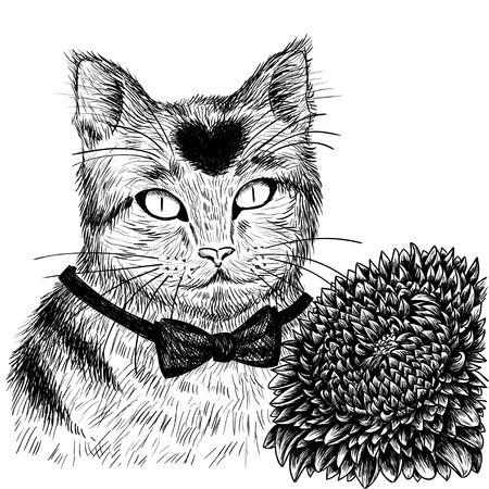 aster flower: Cat with aster flower hand drawn. Vector illustration.