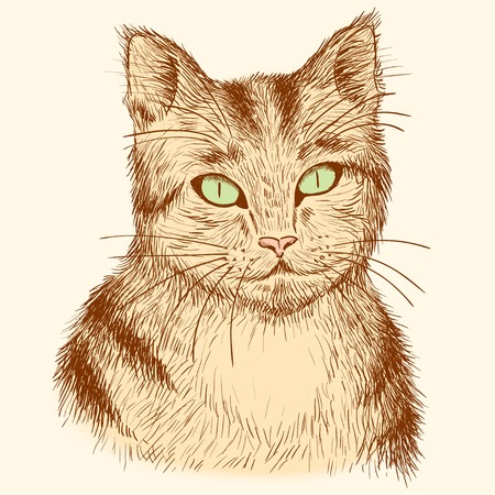 Portrait of tabby cat. Vector  illustration.  Vector
