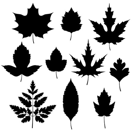 maple wood texture: Set of autumn leaves silhouettes.Vector illustration.