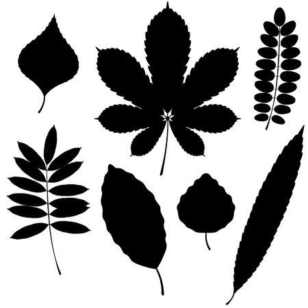 langosta: Colección de vectores de siluetas de hojas aisladas sobre fondo blanco. Hayas y hojas de álamo.