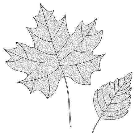 provexemplar: Vektor Insamling av blad siluetter med tunna ådror. Maple och björklöv. Lämnar skiss.