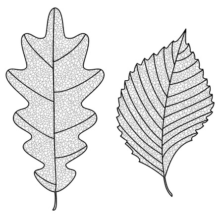 elm: Vector Collection of Leaf Silhouettes with thin veins. Oak and elm leaves. Leaves sketch. Illustration