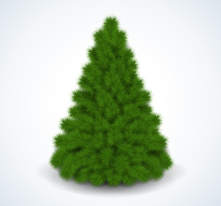 Christmas green tree. Realistic vector illustration. Isolated on white. Vector